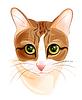 Porträt des charmanten Ingwer Katze