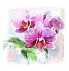 Векторный клипарт: акварель орхидеи завтрак