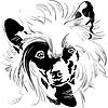 Skizze Chinesischer Schopfhund Handzeichnung