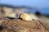 Sea shell laying on stone near seashore | Stock Foto