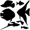 Векторный клипарт: Коллекция аквариумные рыбки