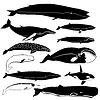 Векторный клипарт: Контуры китов