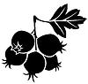 Векторный клипарт: Ягоды боярышника