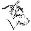 Malamute-Hund
