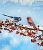 鸟在冬季 | 免版税照片