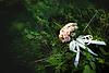 Piękny bukiet kwiatów różowy ślub | Stock Foto
