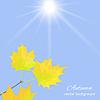 Векторный клипарт: Осенние листья на небо