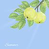 Векторный клипарт: модели с зелеными яблоками и листьями