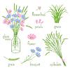 Векторный клипарт: элементы ботаники