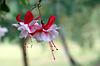 ID 4503852 | Pinkfarbener Blumen in Rot und Weiß | Foto mit hoher Auflösung | CLIPARTO