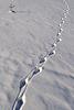 Foto 300 DPI: Tierspuren im Schnee