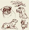Set Hunde - Labrador Retriever, Jagdhund, Mops,