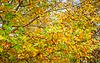 Streszczenie liści tło, piękny gałęzi drzewa | Stock Foto