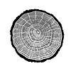 树的裂缝戒指 | 向量插图