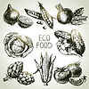 Skizze Gemüse Set. Eco Lebensmittel
