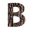 Buchstabe B der Eichenrinde