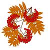 Ветка с осенними листьями и ягодами рябины | Векторный клипарт