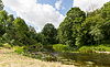 Summer forest and river | Stock Foto
