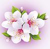 Векторный клипарт: Цветущая сакура городского филиала японской вишни