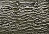 Abstrakcyjny kora drzewa liściastego | Stock Foto