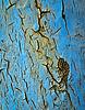 Blaue Farbe zerkratzt Eisen | Stock Foto