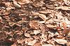 ID 4595279 | Herbstblätter | Foto mit hoher Auflösung | CLIPARTO