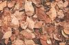 Autumn leaves | Stock Foto