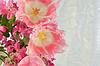 튤립의 테리 꽃다발 | Stock Foto