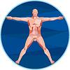 Da Vinci Mann Anatomie Low Polygon