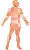 Gross Anatomy Male Low Polygon