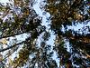 Kronen der Bäume gegen Himmel | Stock Foto