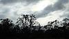 Herbst Bäume Silhouetten | Stock Foto
