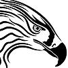 Leiter der Adler mit massiven Schnabel