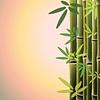 Bambusstämme und Blätter auf sunste Zeit