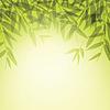 Bambusstämme und Blätter bei Sonnenuntergang Zeit