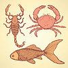 Skizze niedlichen Krabbe, Skorpion und Fische