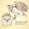 Sketch harpia Vogelkopf im Vintage-Stil