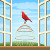 Vogel auf Cage