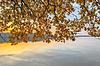 Oddziały z jesieni pozostawia nad rzeką | Stock Foto