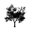 Baum silouette in hoher Auflösung