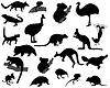 Векторный клипарт: Животные из Австралии