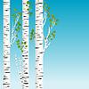 桦树与绿叶背景 | 向量插图