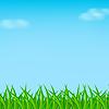 Зеленая трава | Векторный клипарт