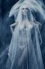 Woman under white veil | Stock Foto