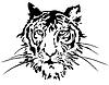 Tiger Gesicht