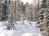 在多洛米蒂,意大利雪针叶木 | 免版税照片