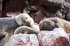 Leones marinos cachorro durmiendo sobre la roca | Foto de stock