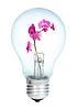 Electrobulb с букетом орхидей | Фото