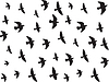 Fliegende Vögel isoliert auf weiß