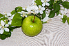Apple and crabapple flowers | Stock Foto